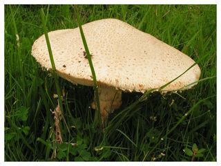 Mushroom7