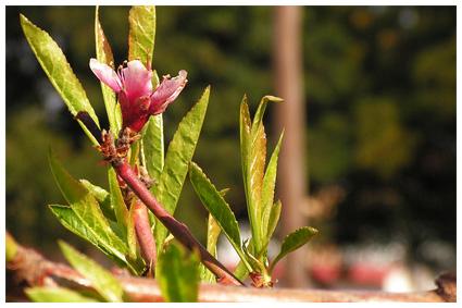 Spring d web